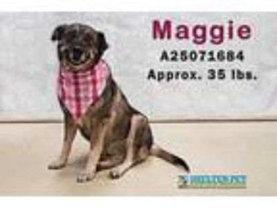Adopt MAGGIE a Black Shepherd (Unknown Type) / Mixed dog in San Angelo