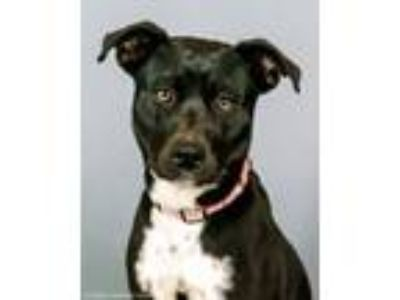 Adopt Irie a Mixed Breed