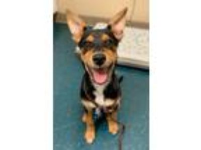 Adopt Christine a Rottweiler / Mixed dog in Oceanside, CA (25583529)