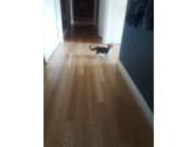 Adopt No name a Tortoiseshell Domestic Shorthair cat in Hendersonville