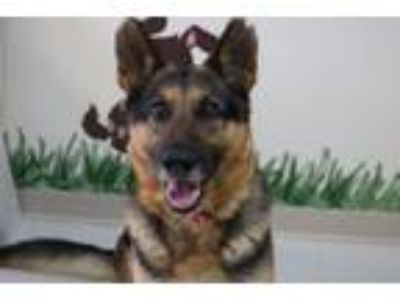 Adopt Vanya a German Shepherd Dog