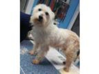 Adopt Willow a White Terrier (Unknown Type, Small) / Mixed dog in Robinson