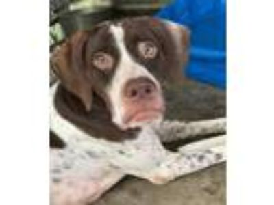 Adopt Riverdale a Pointer