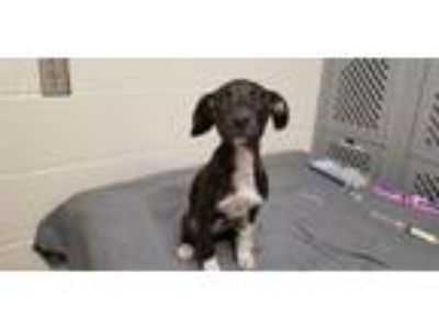 Adopt A314761 a Mixed Breed
