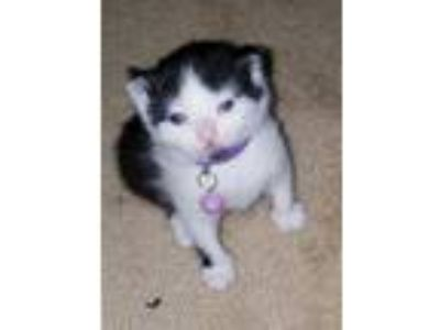 Craigslist - Animals and Pets for Adoption Classifieds in Mt Pocono