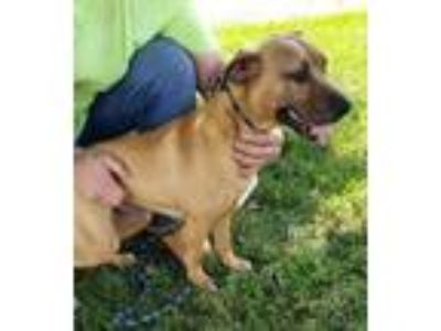 Adopt Betty a Tan/Yellow/Fawn Hound (Unknown Type) / Mixed dog in Mount