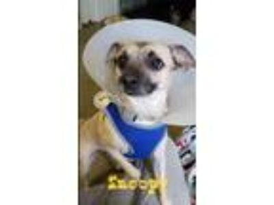 Adopt Snoopy a Terrier