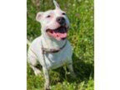 Adopt Tuspots a White Mixed Breed (Medium) / Mixed dog in Chamblee