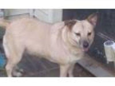 Adopt Piper a Terrier, Shepherd