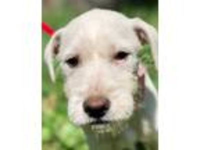 Adopt SONJA a White Terrier (Unknown Type, Medium) / Mixed dog in Pittsburgh