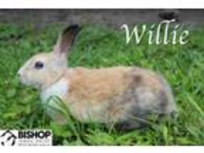 Adopt Willie a American