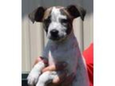 Adopt Quimby-At Wagsmore 7/14 www.lhar.dog to apply a Dachshund, Beagle