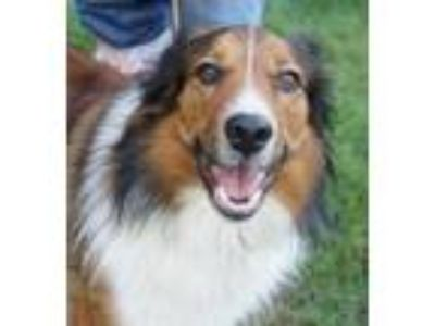 Craigslist Dogs For Sale Classifieds In Orting Wa Claz Org