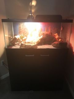 Bearded Dragon Full Setup