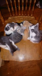 Kittens in need of new forever homes. 9 to choose from