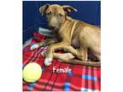 Adopt Avail 5/24 Pen 12 Lab x 14 wks click4pix a Labrador Retriever / Mixed dog