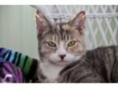 Adopt Zoe a Domestic Shorthair / Mixed cat in Oradell, NJ (24718053)