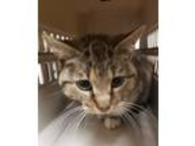 Adopt Bird a Domestic Shorthair / Mixed cat in Birmingham, AL (25493632)