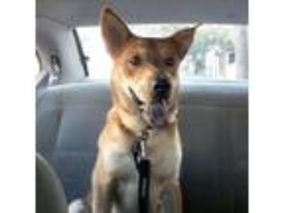 Adopt Etienne a Shepherd, Chow Chow