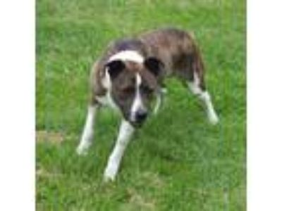 Adopt Jake Long a Hound, Pointer