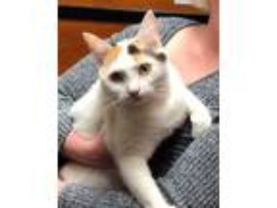 Adopt Zooey a White (Mostly) Calico / Mixed (short coat) cat in Mobile