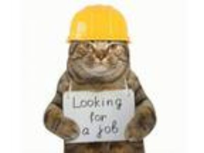 Adopt Working Cats a Domestic Short Hair