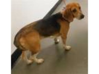 Adopt Pen 177 Copper a Beagle