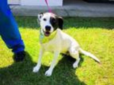 Adopt KILO a Border Collie, Mixed Breed
