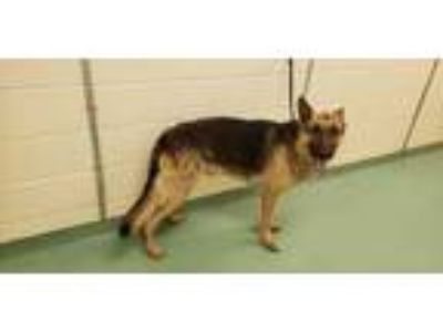 Adopt LUTHER a Tan/Yellow/Fawn - with Black Mixed Breed (Medium) / Mixed dog in
