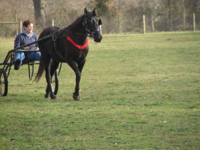 Looking for a 2 or 4 wheel pony cart with seating for 2. Not a sulky, but this is the horse that will pull it, so not heavy.
