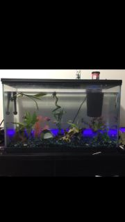 40 gallon fish tank everything included