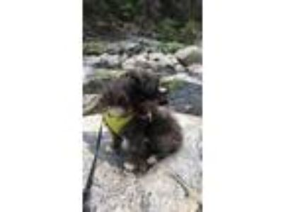 Adopt Luna a Black - with White Terrier (Unknown Type, Medium) / Mixed dog in