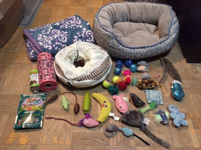 Cat/kitten accessories lot
