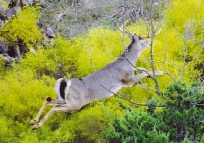 ChristovalSan Angelo  4600 acre hunting lease