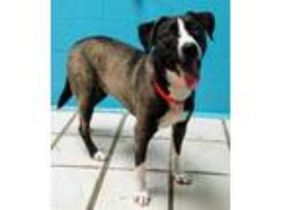 Adopt Oscar a Black Mixed Breed (Large) / Mixed dog in Fort Wayne, IN (25336564)