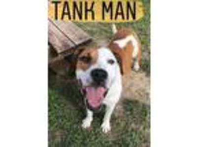Adopt Tank Man a Brown/Chocolate Mixed Breed (Large) / Mixed dog in Kalamazoo