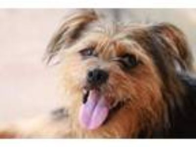 Adopt Marley a Terrier