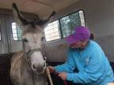 Adopt Brother a Donkey