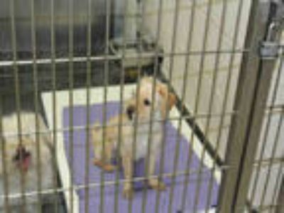 Adopt a Tan/Yellow/Fawn Cairn Terrier / Mixed dog in Upland, CA (25856377)
