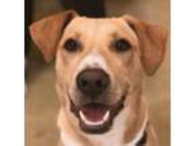Adopt Mynie a Labrador Retriever, Mixed Breed