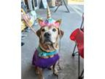 Adopt Sally a Red/Golden/Orange/Chestnut Mixed Breed (Medium) / Mixed dog in