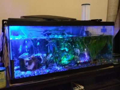 50 gallon fish tank & more