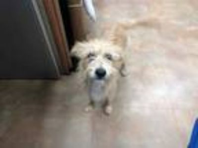 Adopt a Tan/Yellow/Fawn Terrier (Unknown Type, Medium) / Mixed dog in Fort