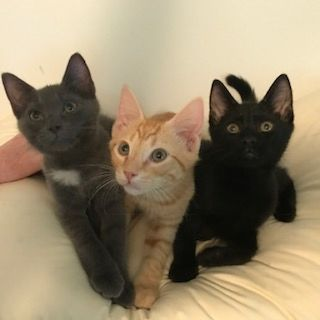 FREE KITTENS TO REPONSIBLE HOME
