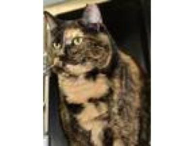 Adopt Fish a Domestic Shorthair / Mixed cat in Versailles, KY (25529413)
