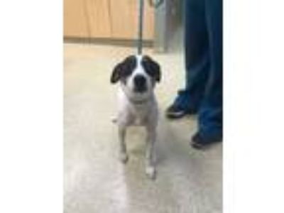 Adopt Theresa a White Mixed Breed (Small) / Mixed dog in Munster, IN (25537507)