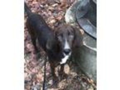 Adopt Bristol a Brindle Mixed Breed (Large) / Mixed dog in Charleston