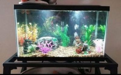 Fish tank and metal stand