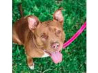 Adopt Launy a Mixed Breed