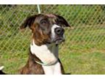 Adopt Lucy a Collie, Mixed Breed